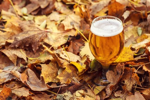 beer glass in fall leaves